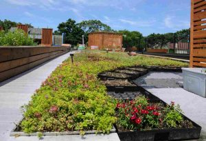 A home with a green, living roof